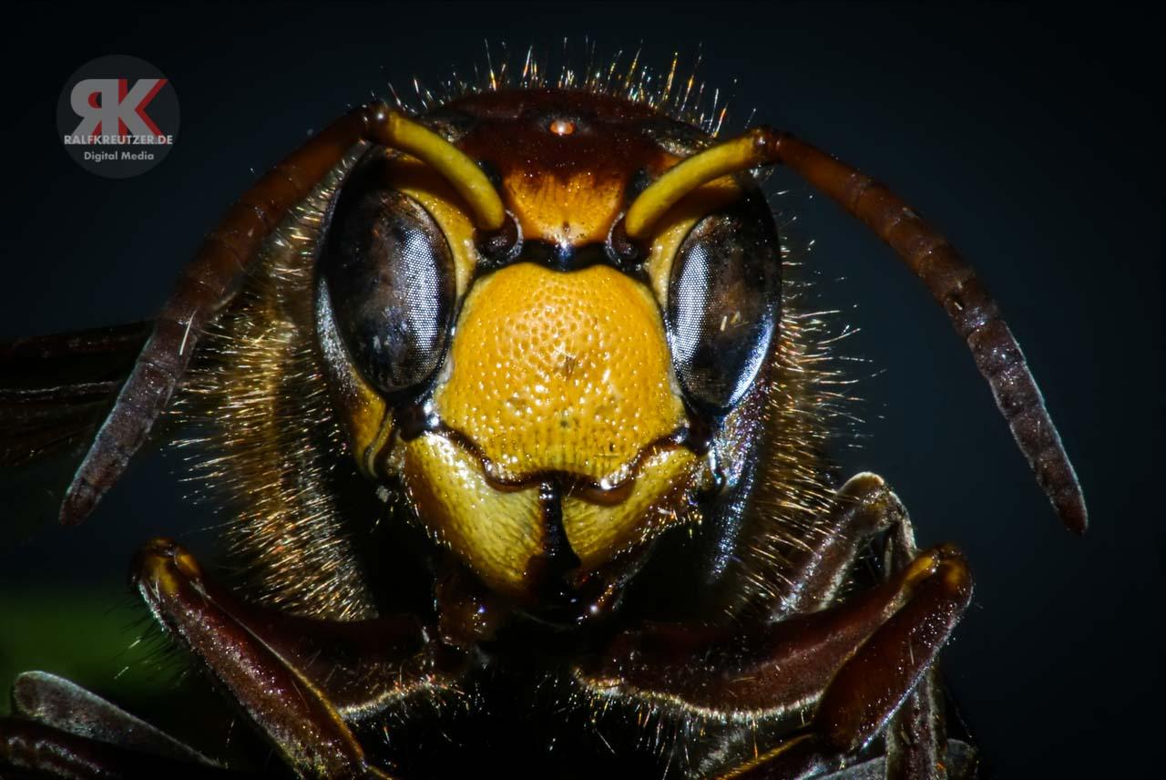 Bee1_r